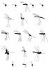 http://polographiste.com/files/gimgs/th-67_67_recherches-moustiques.png
